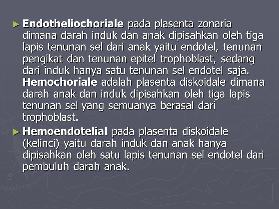 ► Endotheliochoriale pada plasenta zonaria dimana darah induk dan anak dipisahkan oleh tiga lapis tenunan sel dari anak yaitu endotel, tenunan pengikat dan tenunan epitel trophoblast, sedang dari induk hanya satu tenunan sel endotel saja.