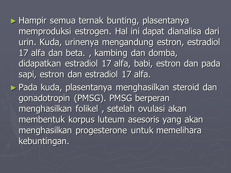 ► Hampir semua ternak bunting, plasentanya memproduksi estrogen. Hal ini dapat dianalisa dari urin. Kuda, urinenya mengandung estron, estradiol 17 alf