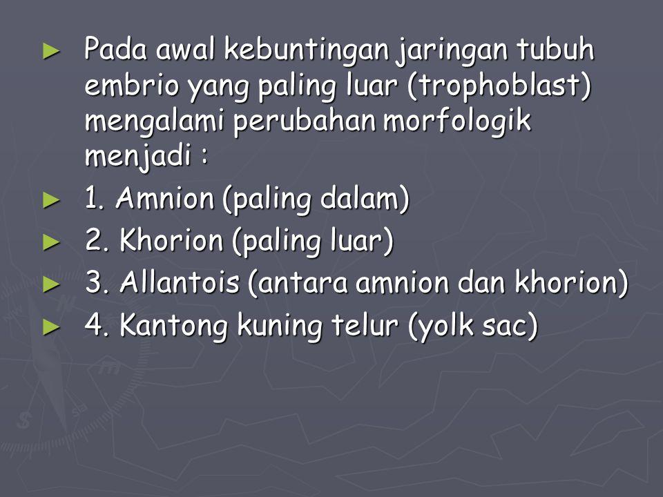 ► Plasenta ada dua macam : 1.1. Plasenta materna ; endometrium 2.