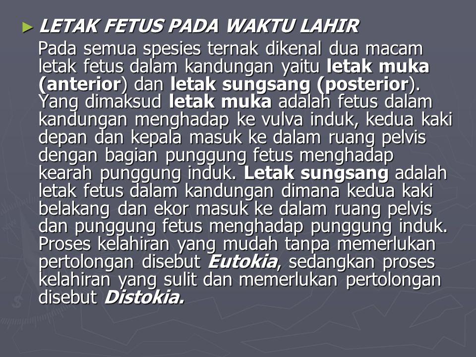 ► LETAK FETUS PADA WAKTU LAHIR Pada semua spesies ternak dikenal dua macam letak fetus dalam kandungan yaitu letak muka (anterior) dan letak sungsang