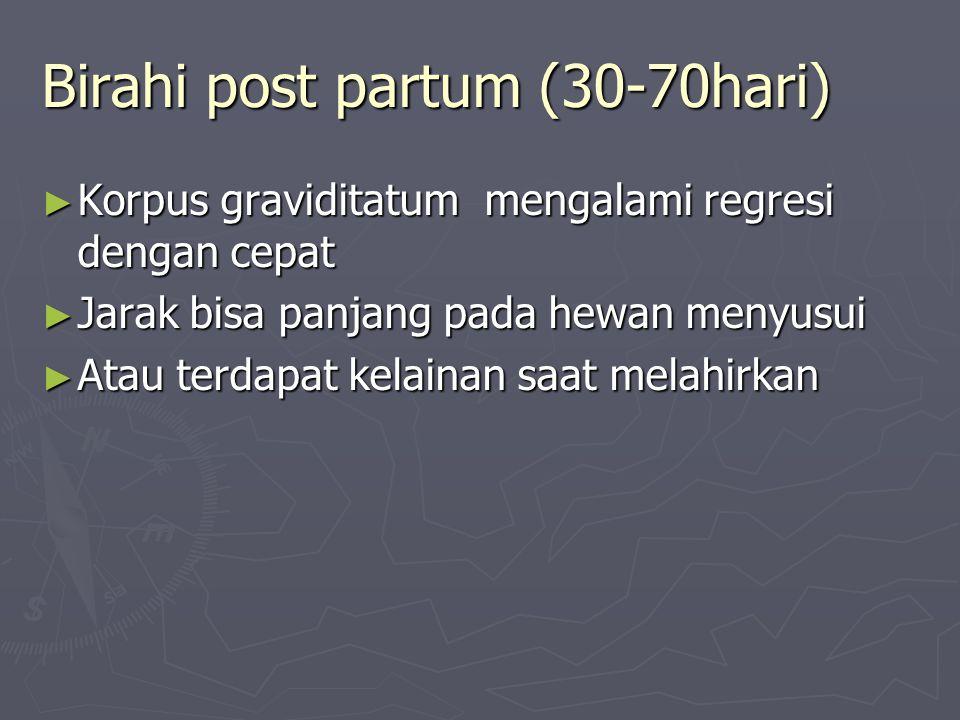 Birahi post partum (30-70hari) ► Korpus graviditatum mengalami regresi dengan cepat ► Jarak bisa panjang pada hewan menyusui ► Atau terdapat kelainan saat melahirkan