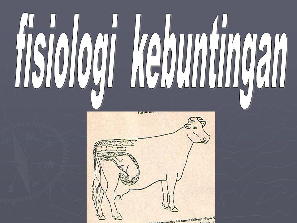 PEMERIKSAAN KEBUNTINGAN PADA TERNAK Karena keinginan manusia untuk mengetahui kebuntingan hewannya secara dini setelah dikawinkan maka ada beberapa teknik untuk mengetahui kebuntingan pada ternak.