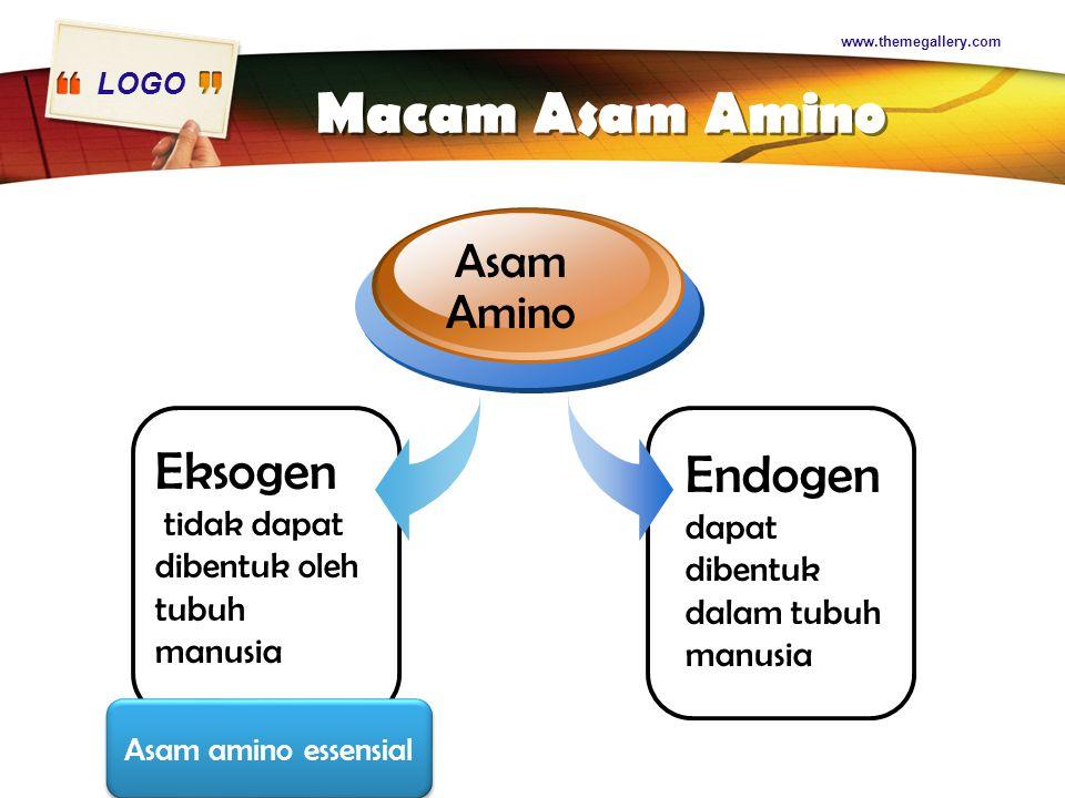 LOGO www.themegallery.com Macam Asam Amino Eksogen tidak dapat dibentuk oleh tubuh manusia Asam Amino Endogen dapat dibentuk dalam tubuh manusia Asam