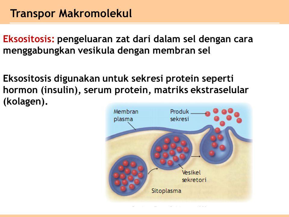 Eksositosis: pengeluaran zat dari dalam sel dengan cara menggabungkan vesikula dengan membran sel Eksositosis digunakan untuk sekresi protein seperti hormon (insulin), serum protein, matriks ekstraselular (kolagen).