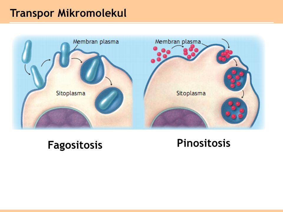 Transpor Mikromolekul Fagositosis Pinositosis