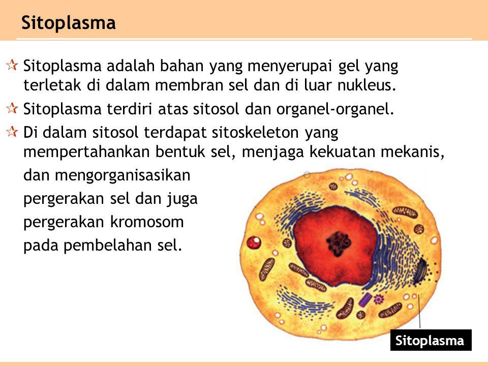  Sitoplasma adalah bahan yang menyerupai gel yang terletak di dalam membran sel dan di luar nukleus.