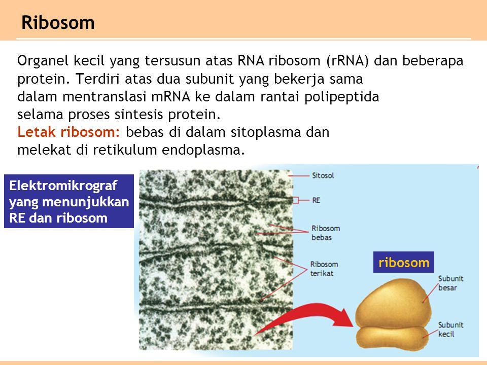 Organel kecil yang tersusun atas RNA ribosom (rRNA) dan beberapa protein.
