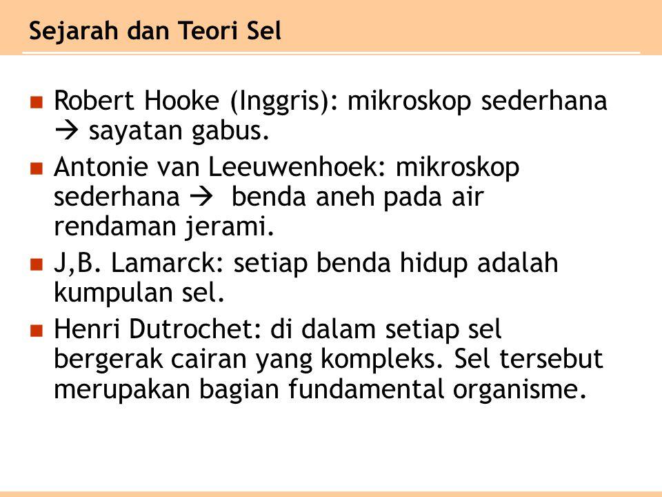 Sejarah dan Teori Sel Robert Hooke (Inggris): mikroskop sederhana  sayatan gabus.