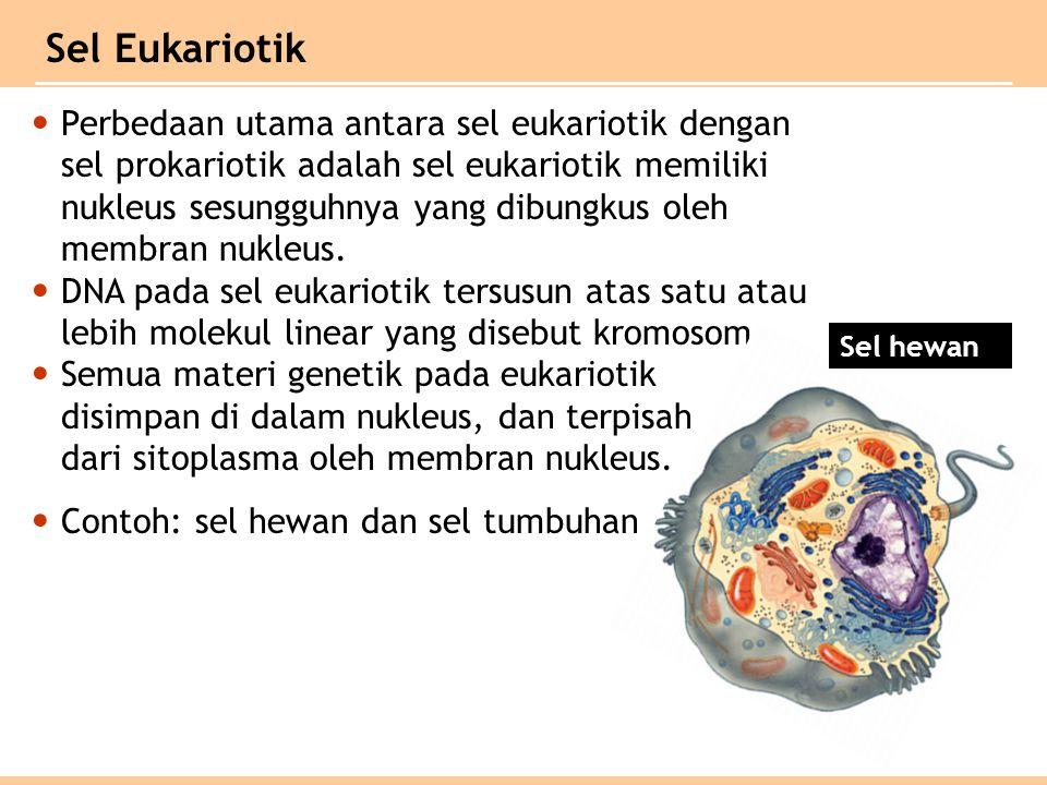 Perbedaan utama antara sel eukariotik dengan sel prokariotik adalah sel eukariotik memiliki nukleus sesungguhnya yang dibungkus oleh membran nukleus.
