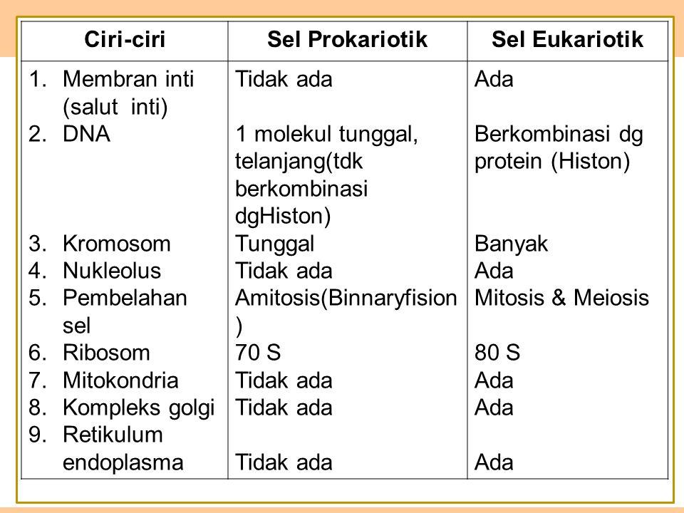 Ciri-ciriSel ProkariotikSel Eukariotik 1.Membran inti (salut inti) 2.DNA ddd d 3.Kromosom 4.Nukleolus 5.Pembelahan sel 6.Ribosom 7.Mitokondria 8.Kompleks golgi 9.Retikulum endoplasma Tidak ada 1 molekul tunggal, telanjang(tdk berkombinasi dgHiston) Tunggal Tidak ada Amitosis(Binnaryfision ) 70 S Tidak ada Ada Berkombinasi dg protein (Histon) Banyak Ada Mitosis & Meiosis 80 S Ada