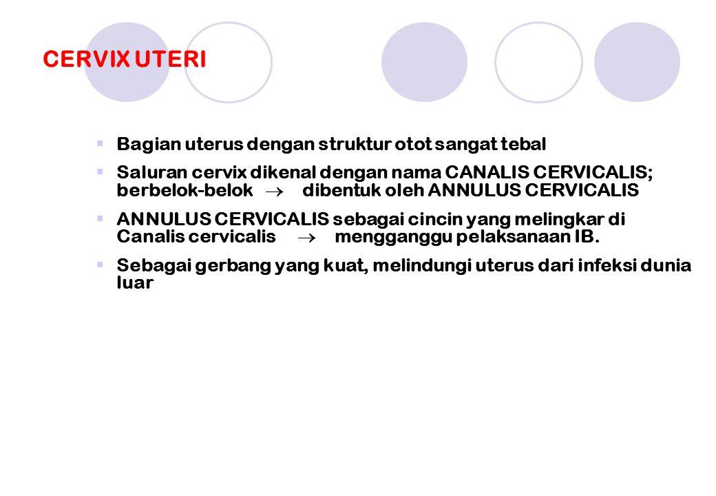 CERVIX UTERI  Bagian uterus dengan struktur otot sangat tebal  Saluran cervix dikenal dengan nama CANALIS CERVICALIS; berbelok-belok  dibentuk oleh ANNULUS CERVICALIS  ANNULUS CERVICALIS sebagai cincin yang melingkar di Canalis cervicalis  mengganggu pelaksanaan IB.