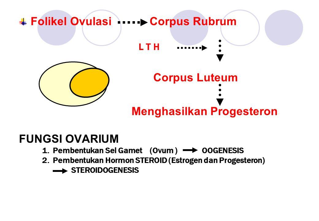 Folikel Ovulasi Corpus Rubrum L T H Corpus Luteum Menghasilkan Progesteron FUNGSI OVARIUM 1. Pembentukan Sel Gamet (Ovum ) OOGENESIS 2. Pembentukan Ho
