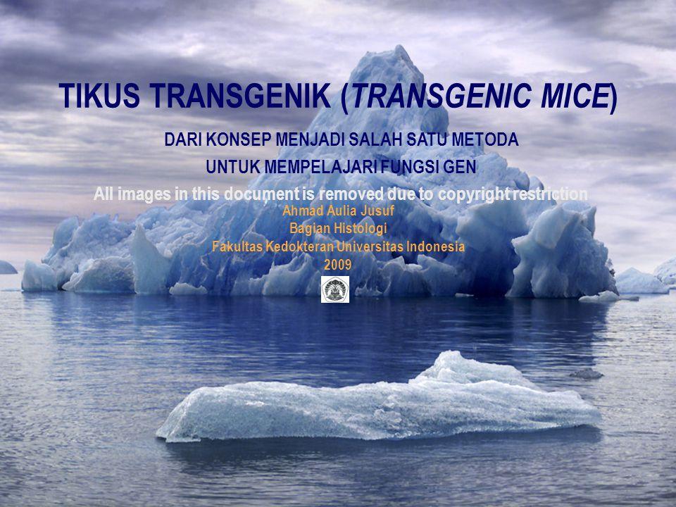 Thursday,November 05, 2009Transgenic Mice/AAJ/Histo22 Persiapan Pembuatan Tikus Transgenik  Persiapan alat dan bahan  Alat dan bahan untuk mengumpulkan telur tikus yang dibuahi (zigot)  Spuit disposible  Hormon Pregnant Mare's Serum Gonadotrophin (PMSG)  Hormon Human Chorionic Gonadotrophin (HCG)  Larutan kultur  larutan D-PBS atau larutan lainnya ditambahkan bovine serum albumin (BSA), asam piruvat dan antibiotik (penisilin dan streptomisin)  Larutan kultur yang mengandung ensim hyaluronidase  Inkubator (temperatur 37C, dengan kelembaban 95% dan mengandung 5% CO2)  Surgical set termasuk watchmaker's forceps  Alkohol 70%  Stereomikroskop  Mouth controlled pipette  35 mm petri dish
