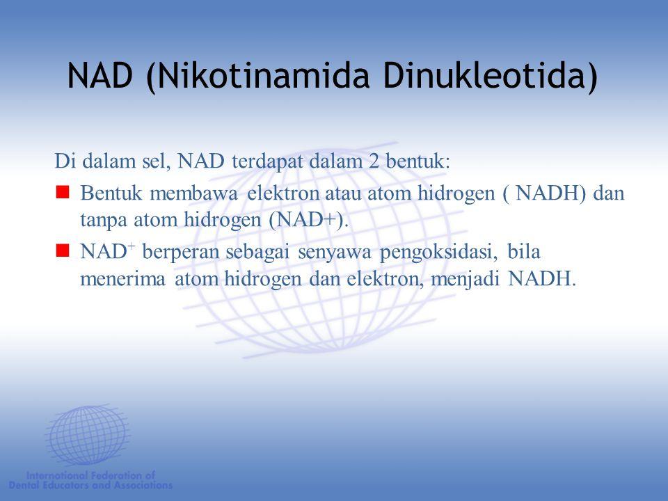 Di dalam sel, NAD terdapat dalam 2 bentuk: Bentuk membawa elektron atau atom hidrogen ( NADH) dan tanpa atom hidrogen (NAD+).