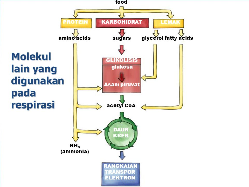 ENERGI KIMIA BIOSINTESIS : anabolic pathway  endergonic reaction DEGRADASI : katabolic pathway  exergonic reaction INTERKONVERSI : katabolic and anabolic conversion ENERGI : asetil-KoA, pyruvat, glycerol  in TCA Cycle and oxphos