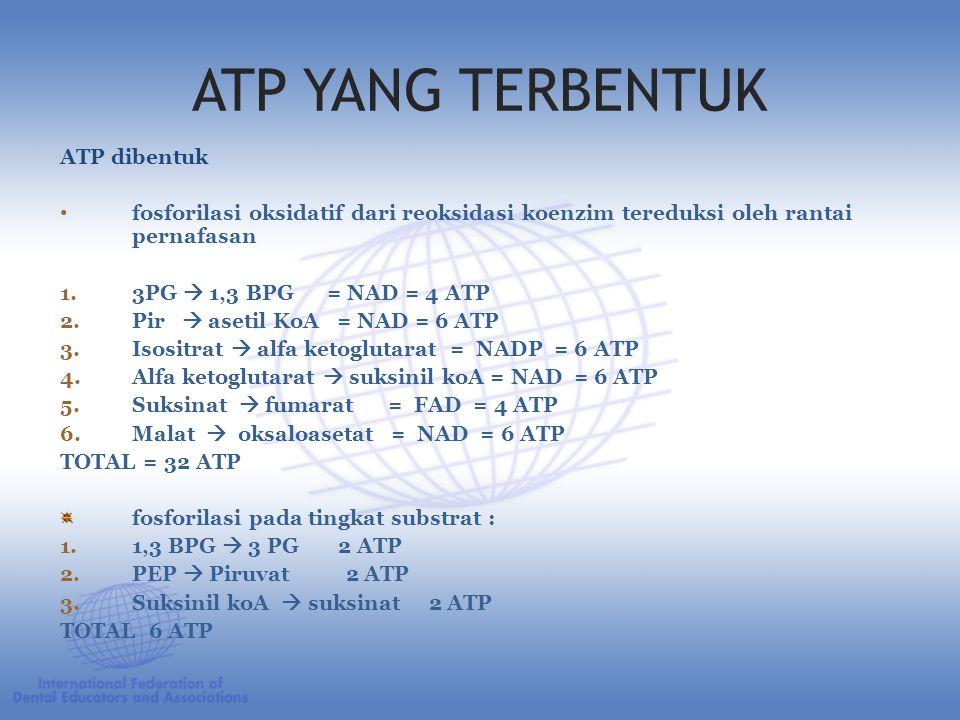 ATP YANG TERBENTUK ATP dibentuk fosforilasi oksidatif dari reoksidasi koenzim tereduksi oleh rantai pernafasan 1.3PG  1,3 BPG = NAD = 4 ATP 2.Pir  asetil KoA = NAD = 6 ATP 3.Isositrat  alfa ketoglutarat = NADP = 6 ATP 4.Alfa ketoglutarat  suksinil koA = NAD = 6 ATP 5.Suksinat  fumarat = FAD = 4 ATP 6.Malat  oksaloasetat = NAD = 6 ATP TOTAL = 32 ATP fosforilasi pada tingkat substrat : 1.1,3 BPG  3 PG 2 ATP 2.PEP  Piruvat 2 ATP 3.Suksinil koA  suksinat 2 ATP TOTAL 6 ATP
