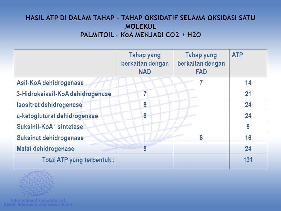 HASIL ATP DI DALAM TAHAP – TAHAP OKSIDATIF SELAMA OKSIDASI SATU MOLEKUL PALMITOIL – KoA MENJADI CO2 + H2O Tahap yang berkaitan dengan NAD Tahap yang berkaitan dengan FAD ATP Asil-KoA dehidrogenase714 3-Hidroksiasil-KoA dehidrogenase721 Isositrat dehidrogenase824 a-ketoglutarat dehidrogenase824 Suksinil-KoA * sintetase8 Suksinat dehidrogenase816 Malat dehidrogenase824 Total ATP yang terbentuk :131