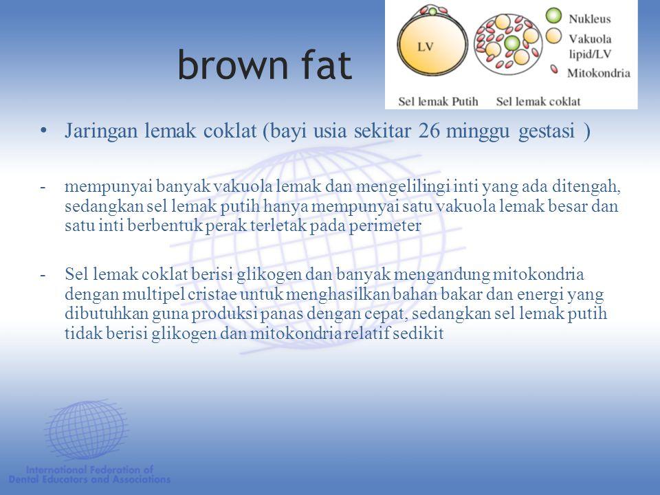 brown fat Jaringan lemak coklat (bayi usia sekitar 26 minggu gestasi ) -mempunyai banyak vakuola lemak dan mengelilingi inti yang ada ditengah, sedangkan sel lemak putih hanya mempunyai satu vakuola lemak besar dan satu inti berbentuk perak terletak pada perimeter -Sel lemak coklat berisi glikogen dan banyak mengandung mitokondria dengan multipel cristae untuk menghasilkan bahan bakar dan energi yang dibutuhkan guna produksi panas dengan cepat, sedangkan sel lemak putih tidak berisi glikogen dan mitokondria relatif sedikit