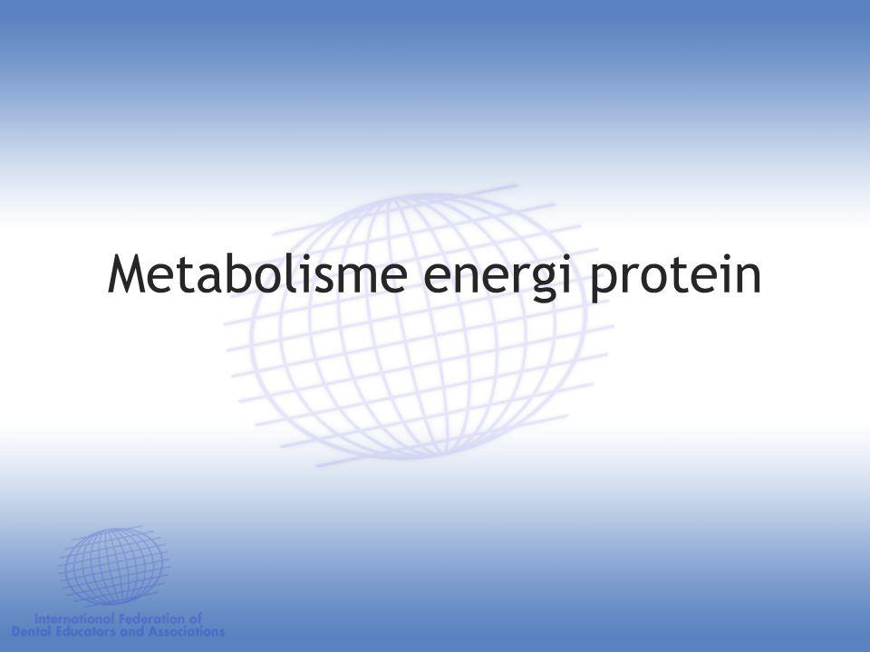 Metabolisme energi protein
