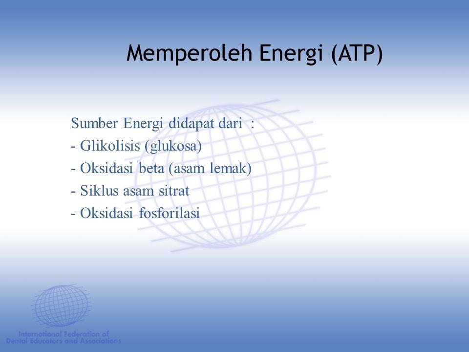 Sumber Energi didapat dari : - Glikolisis (glukosa) - Oksidasi beta (asam lemak) - Siklus asam sitrat - Oksidasi fosforilasi Memperoleh Energi (ATP)