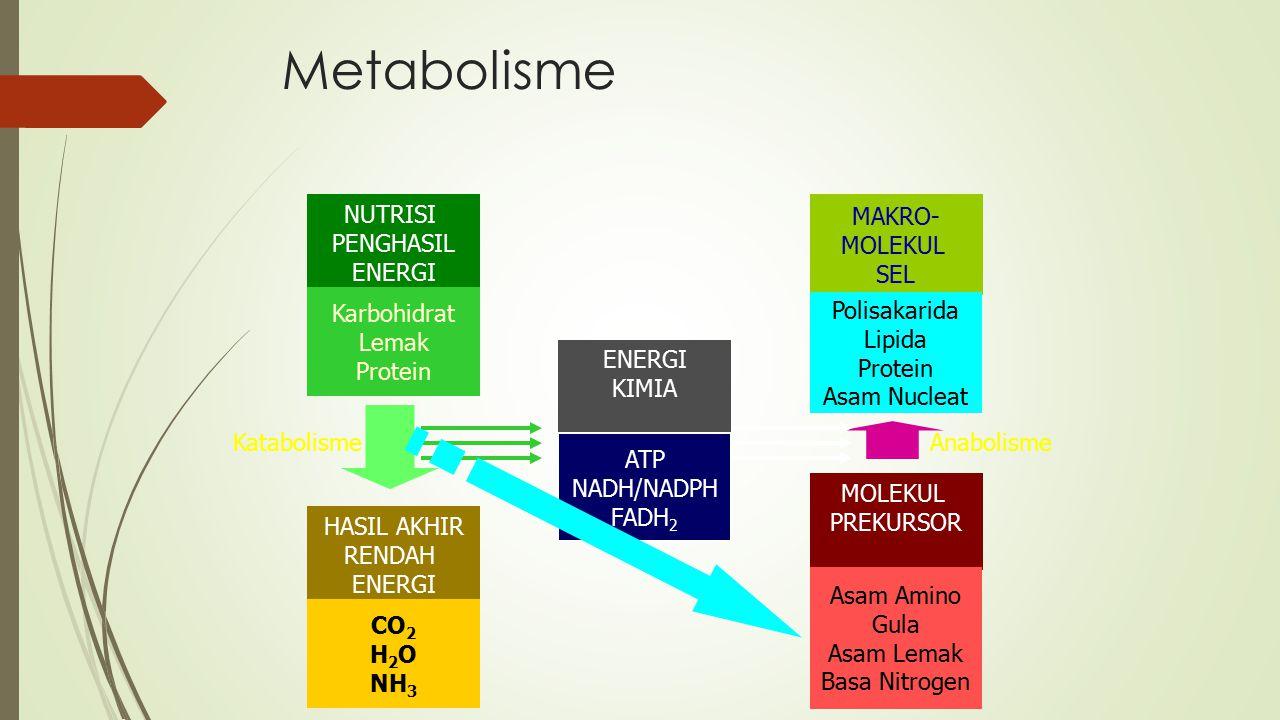 Metabolisme NUTRISI PENGHASIL ENERGI Karbohidrat Lemak Protein HASIL AKHIR RENDAH ENERGI CO 2 H 2 O NH 3 MAKRO- MOLEKUL SEL Polisakarida Lipida Protei