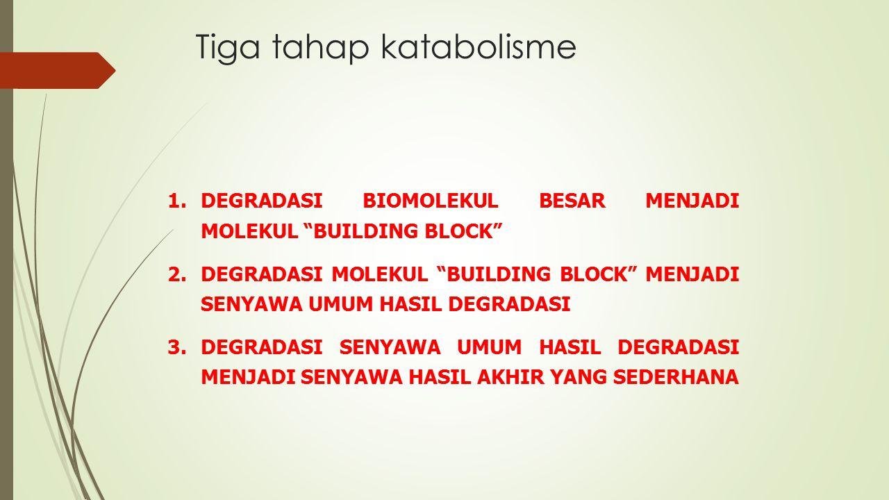 """Tiga tahap katabolisme 1.DEGRADASI BIOMOLEKUL BESAR MENJADI MOLEKUL """"BUILDING BLOCK"""" 2.DEGRADASI MOLEKUL """"BUILDING BLOCK"""" MENJADI SENYAWA UMUM HASIL D"""