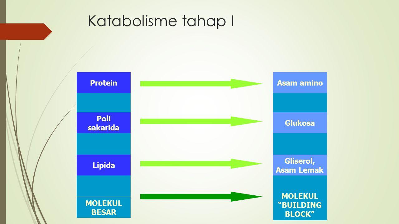 "MOLEKUL ""BUILDING BLOCK"" MOLEKUL BESAR Katabolisme tahap I Protein Poli sakarida Lipida Asam amino Glukosa Gliserol, Asam Lemak"