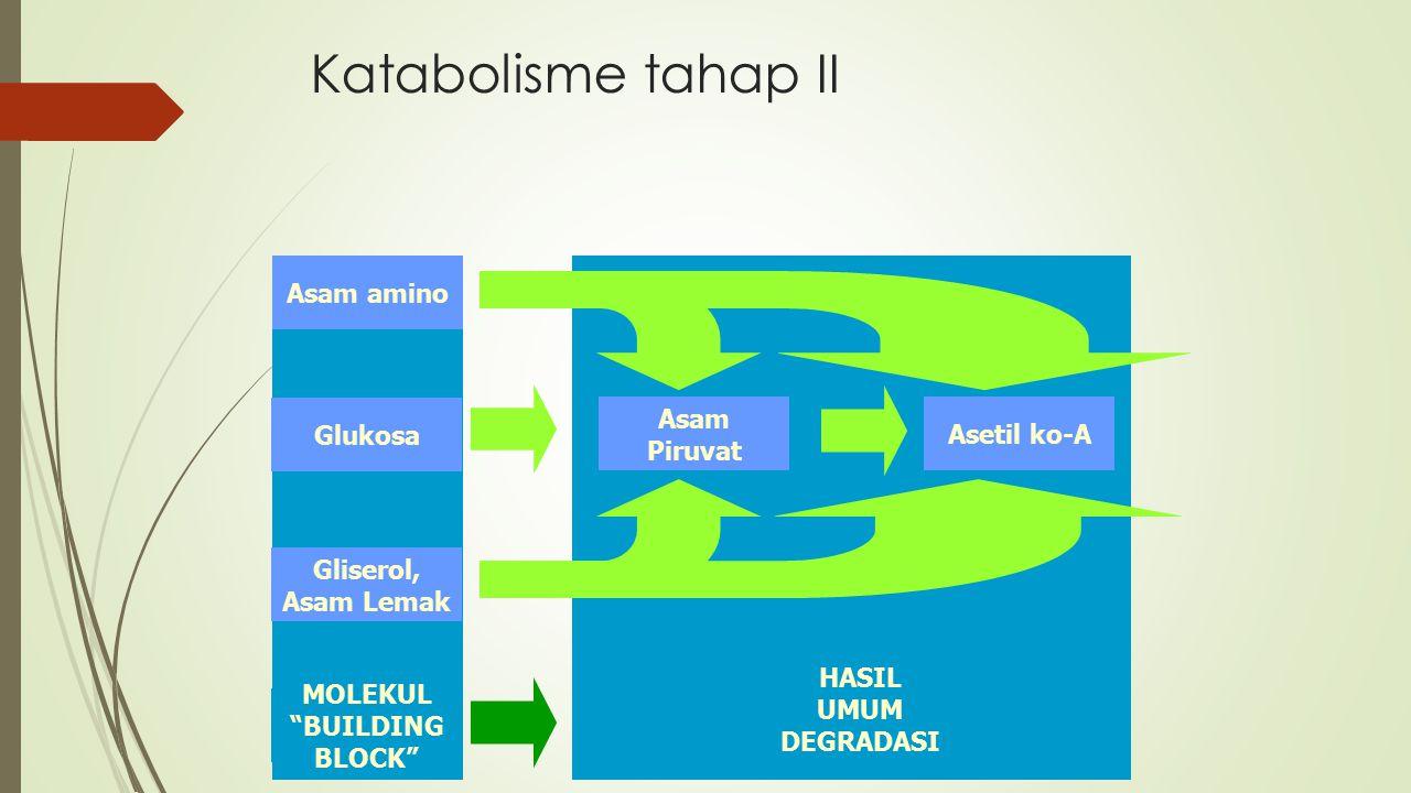 "HASIL UMUM DEGRADASI MOLEKUL ""BUILDING BLOCK"" Katabolisme tahap II Asam amino Glukosa Gliserol, Asam Lemak Asam Piruvat Asetil ko-A"