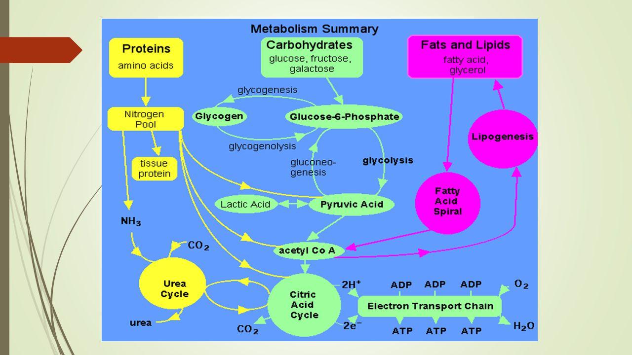 glukosa glukosa 6-fosfat fruktosa 6-fosfat fruktosa 1,6-difosfat ADP ATP