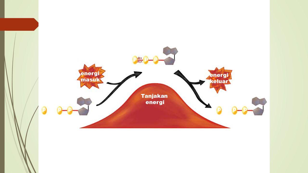 Memperoleh Energi dari Makanan ■ Bagaimana makanan diubah menjadi energi.