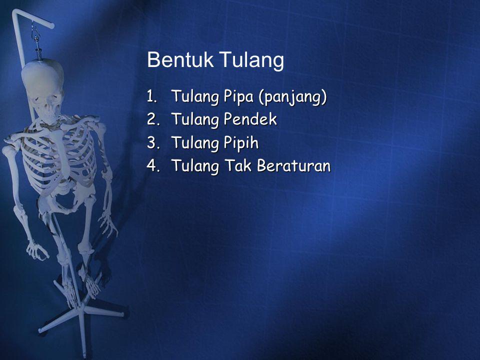 Bentuk Tulang 1.Tulang Pipa (panjang) 2.Tulang Pendek 3.Tulang Pipih 4.Tulang Tak Beraturan