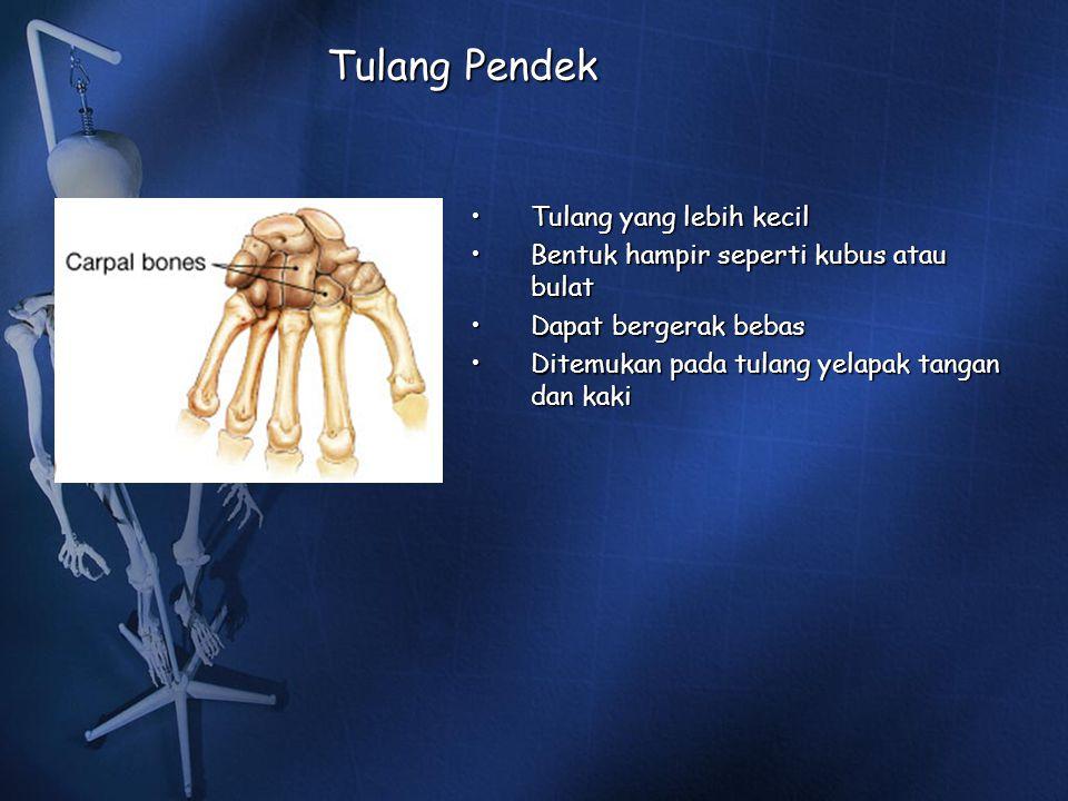 Tulang Pendek Tulang yang lebih kecilTulang yang lebih kecil Bentuk hampir seperti kubus atau bulatBentuk hampir seperti kubus atau bulat Dapat berger