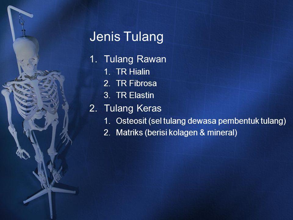 Jenis Tulang 1.Tulang Rawan 1.TR Hialin 2.TR Fibrosa 3.TR Elastin 2.Tulang Keras 1.Osteosit (sel tulang dewasa pembentuk tulang) 2.Matriks (berisi kol