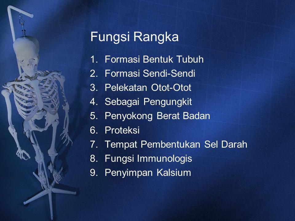 Fungsi Rangka 1.Formasi Bentuk Tubuh 2.Formasi Sendi-Sendi 3.Pelekatan Otot-Otot 4.Sebagai Pengungkit 5.Penyokong Berat Badan 6.Proteksi 7.Tempat Pemb
