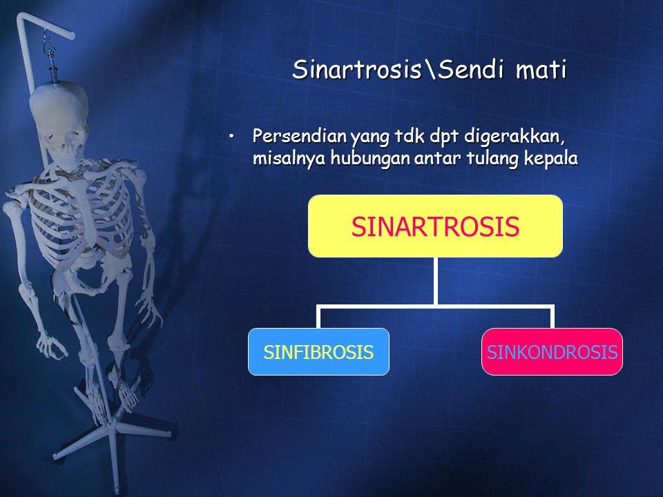 Sinartrosis\Sendi mati Persendian yang tdk dpt digerakkan, misalnya hubungan antar tulang kepalaPersendian yang tdk dpt digerakkan, misalnya hubungan