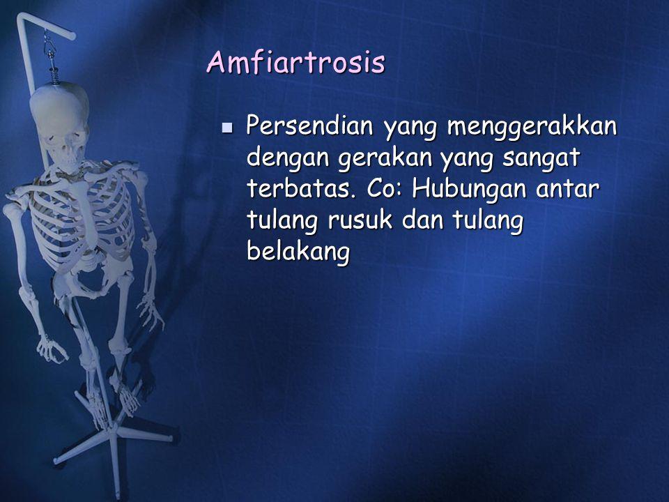 Amfiartrosis Persendian yang menggerakkan dengan gerakan yang sangat terbatas. Co: Hubungan antar tulang rusuk dan tulang belakang Persendian yang men