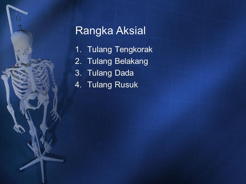 Rangka Aksial 1.Tulang Tengkorak 2.Tulang Belakang 3.Tulang Dada 4.Tulang Rusuk
