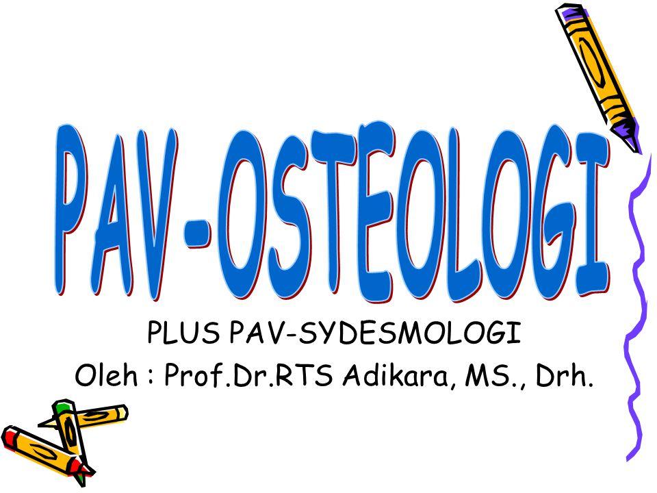 Periosteum: merupakan membran yang membungkus permukaan luar tulang, kecuali pada bagian yang dilapisi tulang rawan.