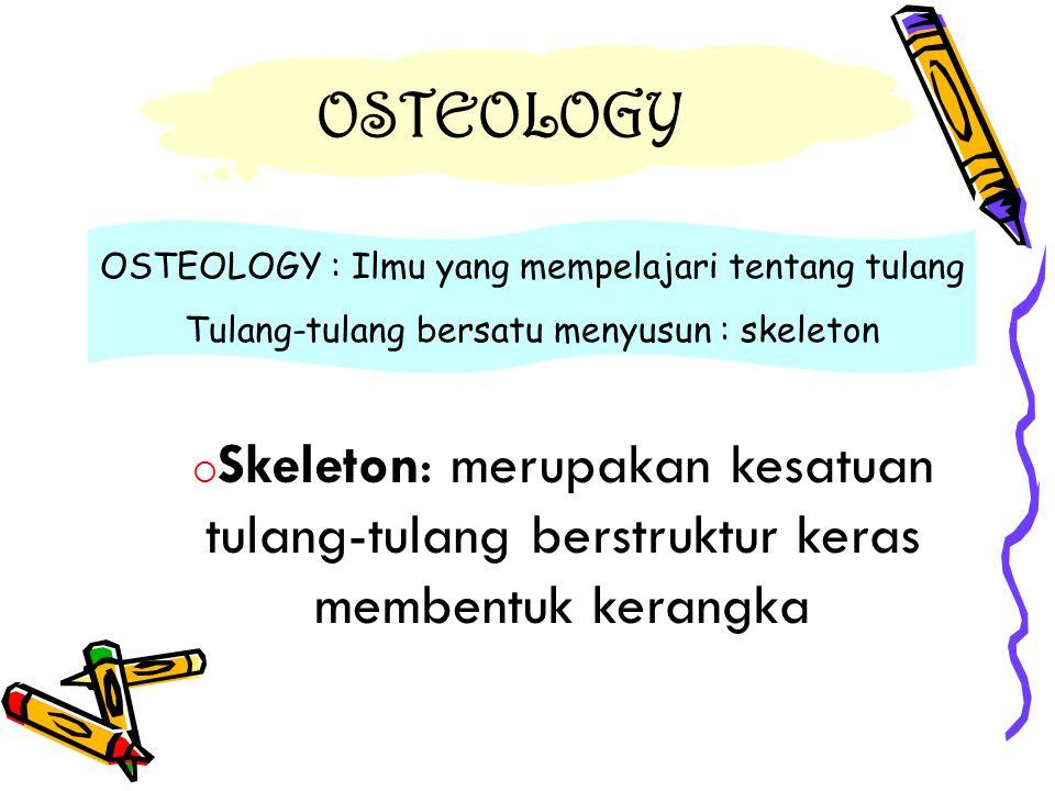 SISTIM TULANG DAN PERTAUTANNYA FERTILISASI  ZYGOTE (mitosis: cleavage)  MORULA  BLASTULA  GASTRULA  terbagi 3: - ectoderm : lapisan luar  kulit & saraf - endoderm: sel2 lapisan dalam  jeroan - mesoderm: sel2 terletak diantara ke-2 lapisan diatas  otot & tulang.