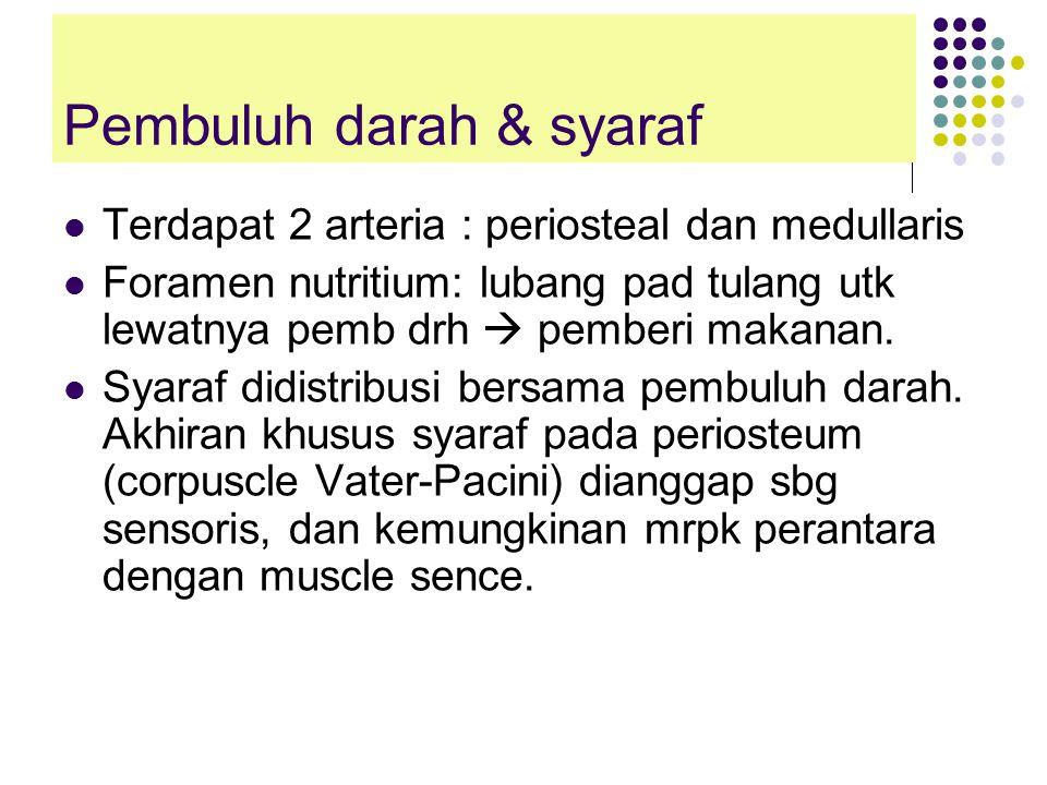 Pembuluh darah & syaraf Terdapat 2 arteria : periosteal dan medullaris Foramen nutritium: lubang pad tulang utk lewatnya pemb drh  pemberi makanan.