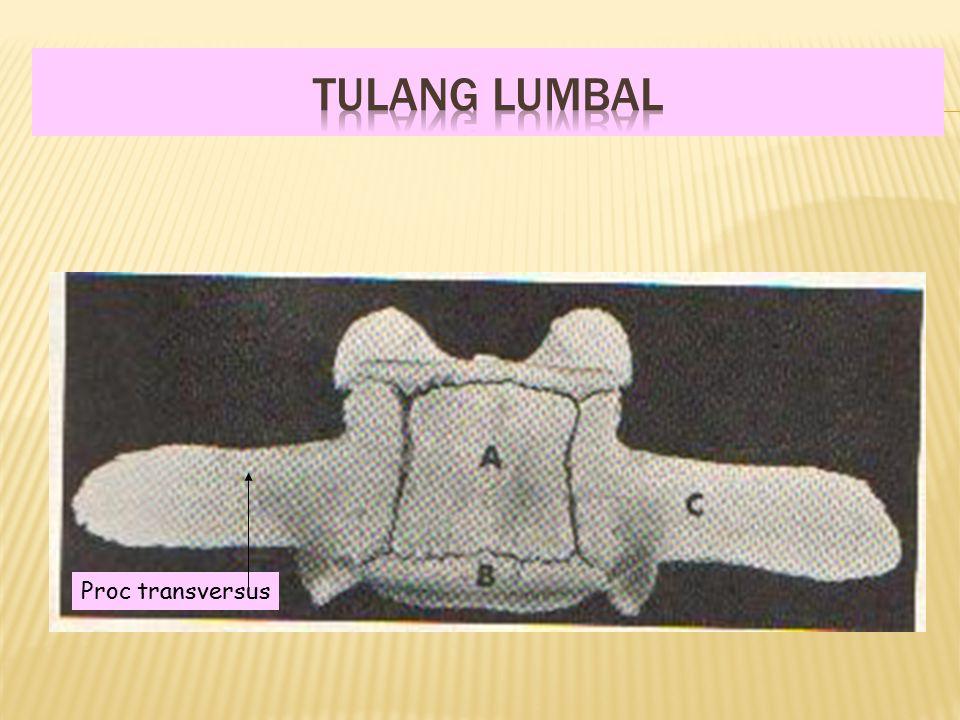 Proc transversus