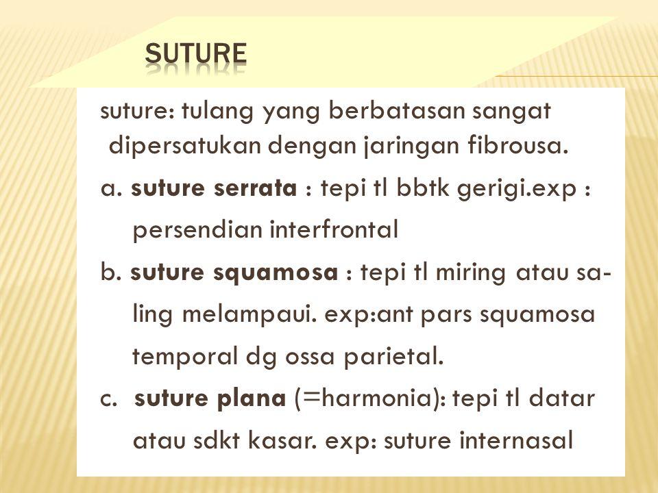 suture: tulang yang berbatasan sangat dipersatukan dengan jaringan fibrousa.