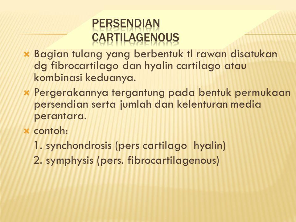  Bagian tulang yang berbentuk tl rawan disatukan dg fibrocartilago dan hyalin cartilago atau kombinasi keduanya.