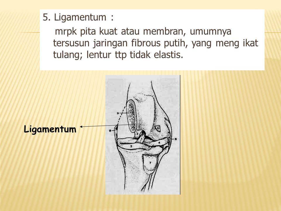 5. Ligamentum : mrpk pita kuat atau membran, umumnya tersusun jaringan fibrous putih, yang meng ikat tulang; lentur ttp tidak elastis. Ligamentum