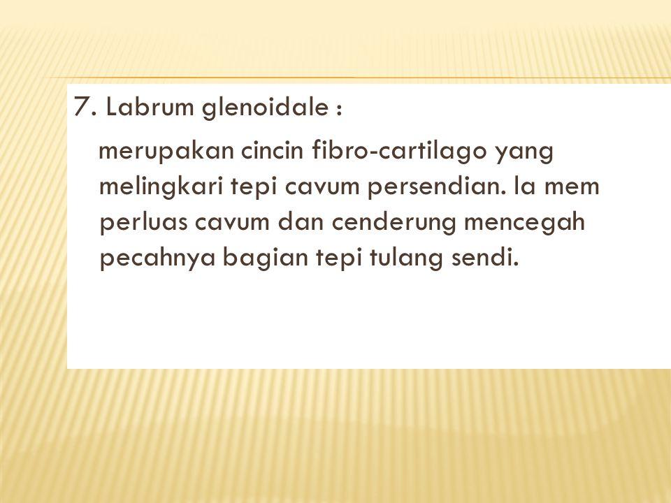 7.Labrum glenoidale : merupakan cincin fibro-cartilago yang melingkari tepi cavum persendian.