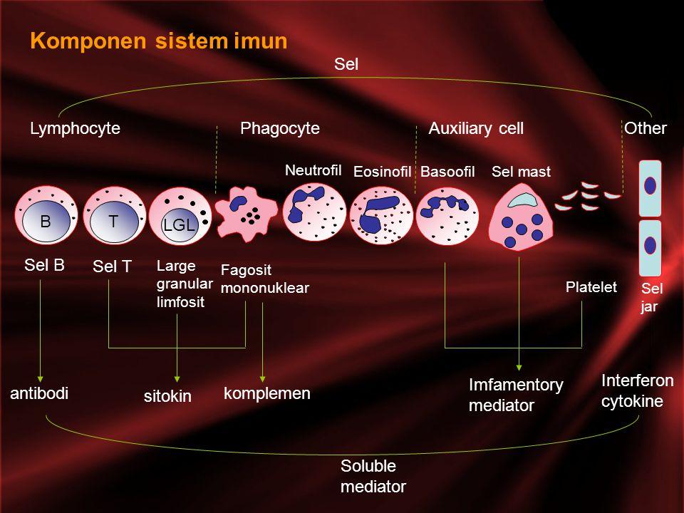 Komponen sistem imun Lymphocyte Phagocyte Auxiliary cell Other B T LGL Sel B Sel T Large granular limfosit Fagosit mononuklear Neutrofil EosinofilBasoofilSel mast Platelet Sel jar Soluble mediator antibodi sitokin komplemen Imfamentory mediator Interferon cytokine Sel