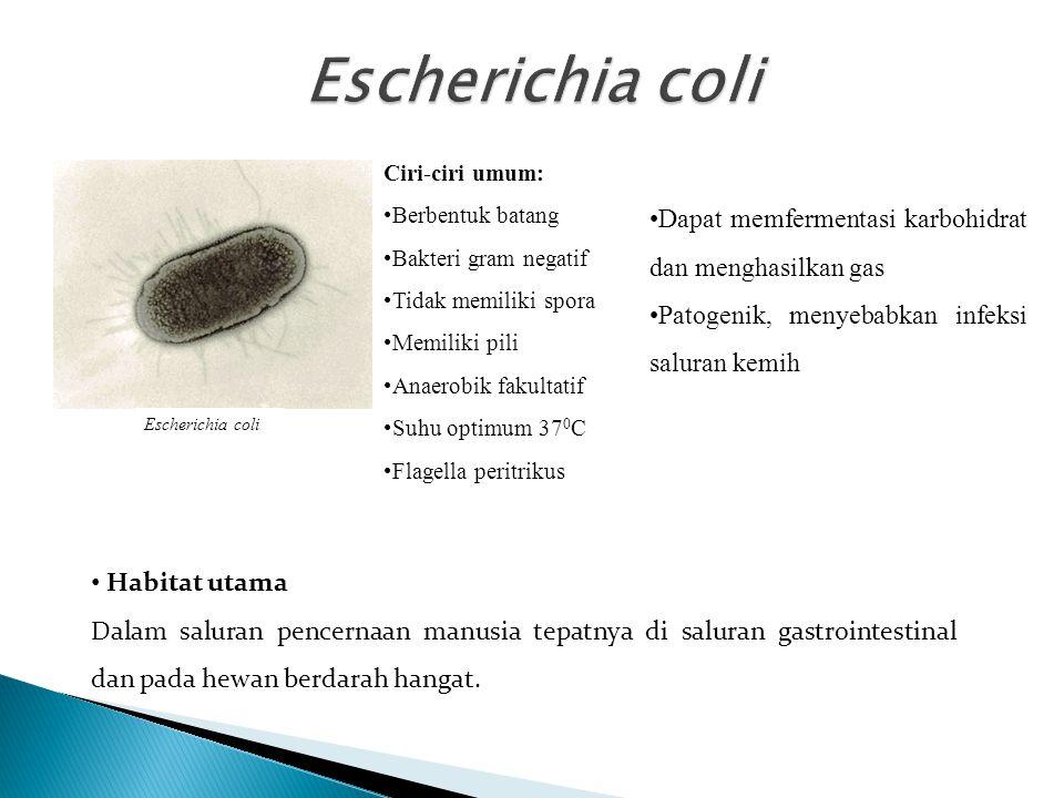 Virulensi dan infeksi bakteri Escherichia coli Penyebab diare dan Gastroenteritis (suatu peradangan pada saluran usus).