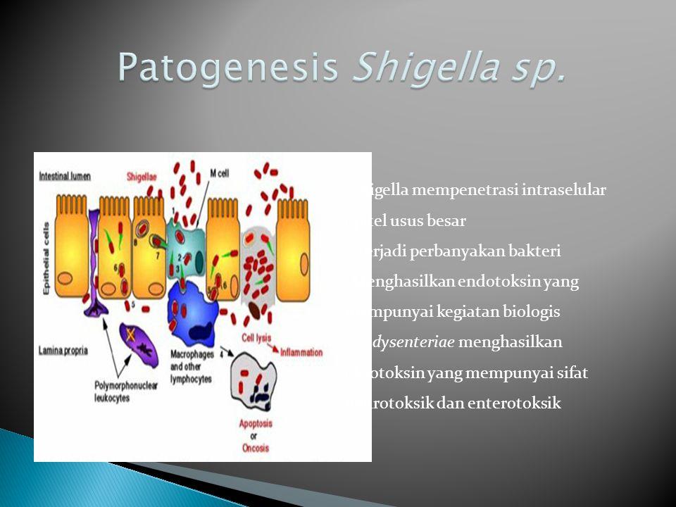  Diagnosis laboratoris Shigelosis - Darah dan lendir dalam tinja penderita diare yang mendadak.