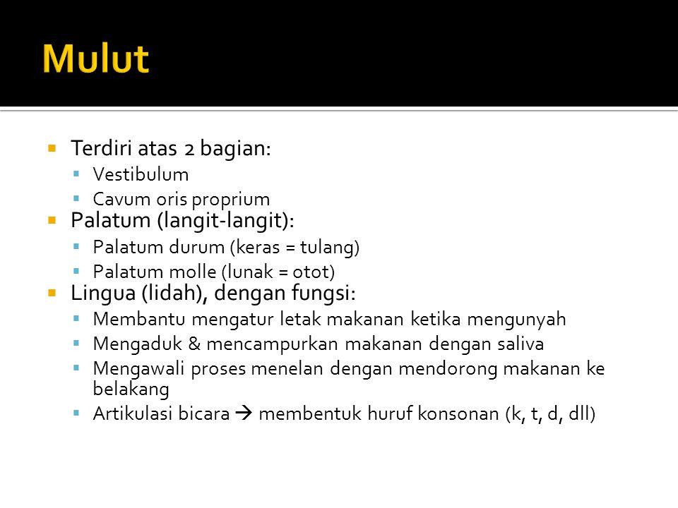  Terdiri atas 2 bagian:  Vestibulum  Cavum oris proprium  Palatum (langit-langit):  Palatum durum (keras = tulang)  Palatum molle (lunak = otot)