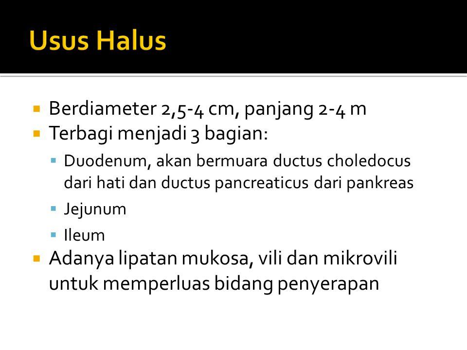  Berdiameter 2,5-4 cm, panjang 2-4 m  Terbagi menjadi 3 bagian:  Duodenum, akan bermuara ductus choledocus dari hati dan ductus pancreaticus dari p
